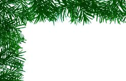 Detail of coniferous - frame Royalty Free Stock Photos