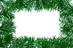 Detail of coniferous - frame Royalty Free Stock Image