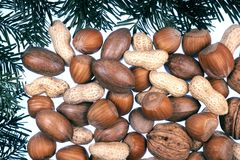 Detail of coniferous and nuts  - frame Royalty Free Stock Photos