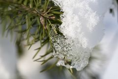 Detail of coniferous twigs with frozen snow Stock Image