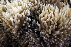 Detail of coral  in the Red sea. Stock Photos