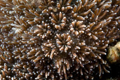Detail of coral in the Red sea. stock images