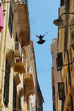 Corfu street. Detail of Corfu street,pigeon flying Royalty Free Stock Images