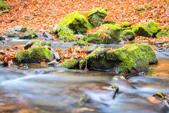 Detail of creek and mossy stones in autumnal forest Stock Images