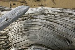Detail of a curved driftwood log at Flagstaff Lake, Maine. Stock Images