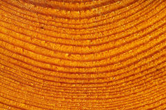 Detail of cut tree. Siberian larch tree Stock Image