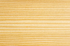 Detail of cut tree. Spruce tree Royalty Free Stock Photos