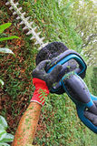 Detail of cutting thuja hedge with hedge clippers, professional Stock Image