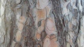 Detail in de boom stock afbeelding