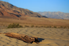 Detail of a dead tree trunk in the desert dunes during sunrise Royalty Free Stock Image