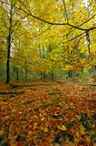 Detail deciduous forest. Detail of deciduous forest in autumn, Czech Republic royalty free stock image