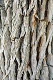 Heavily Textured Tree Bark. Detail of deep heavily textured and patterned tree bark. A natural authentic semi abstract pattern royalty free stock photos