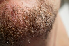 Detail of dense Caucasian man`s brown and black facial hair. Macro detail of dense Caucasian man`s brown and black facial hair Royalty Free Stock Photo
