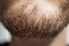 Detail of dense Caucasian man`s brown and black facial hair. Macro detail of dense Caucasian man`s brown and black facial hair Stock Image