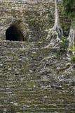 Detail der überwucherten Mayapyramide von Dzibanche stockfoto