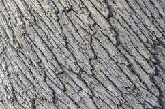 Detail der Barke auf einem Holm Oak-Baum Lizenzfreies Stockfoto