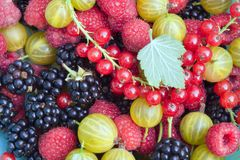 Detail der Gartenfrucht Stockfoto