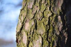 Detail der gezierten Rinde im Wald lizenzfreie stockfotos