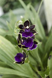 Detail der Orchidee stockfoto