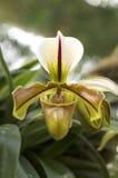 Detail der Orchidee stockfotografie