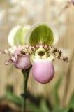Detail der Orchidee stockbilder