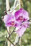 Detail der Orchidee lizenzfreie stockfotografie