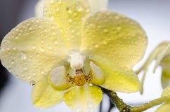 Detail der Orchidee stockbild