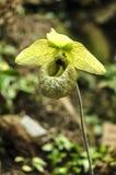 Detail der Orchidee lizenzfreie stockfotos