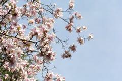 Detail der rosafarbenen Blumen Stockfotografie