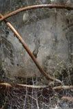 Detail der verwitterten Glaslaterne mit Spinnennetzen und -mehltau Lizenzfreies Stockbild