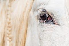 Detail des Auges eines Pferds Lizenzfreies Stockbild