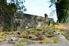 Detail des gelben Herbstblattes Stockbilder