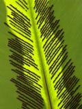 Detail des grünen Blattes Lizenzfreies Stockbild
