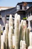 Detail des Kaktuswachsens Stockfotos
