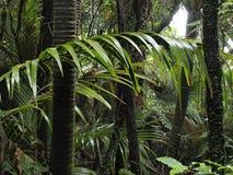Detail des Waldes Stockbilder
