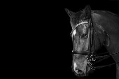 Detail des Pferdeportraits Lizenzfreie Stockfotos