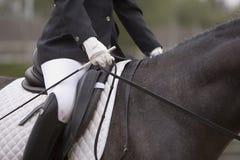 Detail des Sattels und der Führungen ein spanisches reinrassiges Pferd lizenzfreies stockfoto