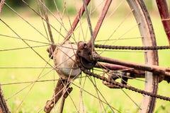 Detail des schmutzigen alten Fahrrades auf dem Reisgebiet Stockfotos