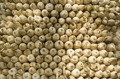 Detail des trocknenden Mais freundlich gestapelt Lizenzfreies Stockbild