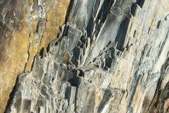 Detail 03 des versteinerten Holzes Stockfoto