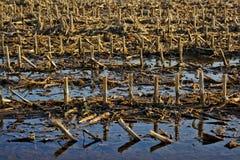 Detail des Winterackerlands nach dem Regen Stockfotografie