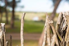 Detail des Zweigs in einem Ausblick stockbild