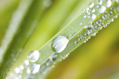 Detail of dew on a blade of grass Stock Photography