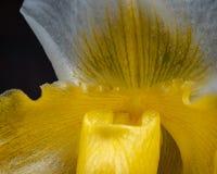 Detail dichte omhooggaande orchidee stock foto's