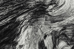 Detail of died wood texture black and white. Nature art photography Royalty Free Stock Photography