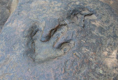 Detail of dinosaur tracks Royalty Free Stock Images