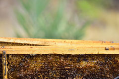 Detail of a division board en una colmena, a beekeeper preparing the extraction of the honey. Royalty Free Stock Photos