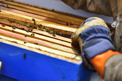 Detail of a division board en una colmena. Stock Images