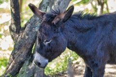 detail of donkey nose royalty free stock photos