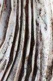 Detail of a drape ancient vestal marble Stock Photos